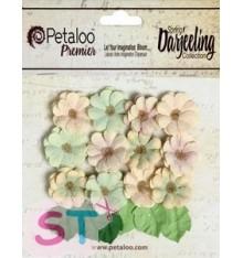 Daisies x 18 Pistachio