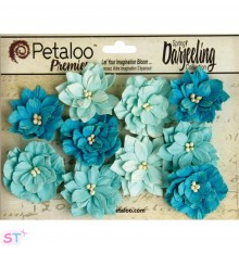 Dahlia Teastained Teal x 10