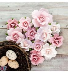 Isabella Mulberry Vidette rosas x 12