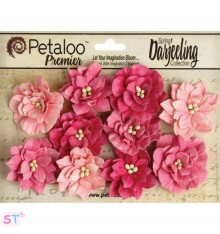 Dahlia Teastained Pink x 10
