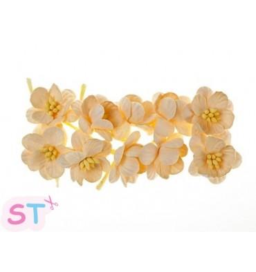 Cherry Blossom Melocotón x 10 Scrapberrys