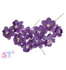 Cherry Blossom Violeta x 10 Scrapberrys