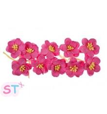 Cherry Blossom Rosa x 10 Scrapberrys